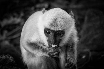 Affengehirn von Jayzon Photo