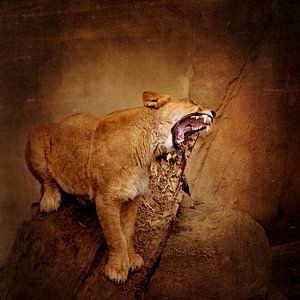 Hungrige Löwin