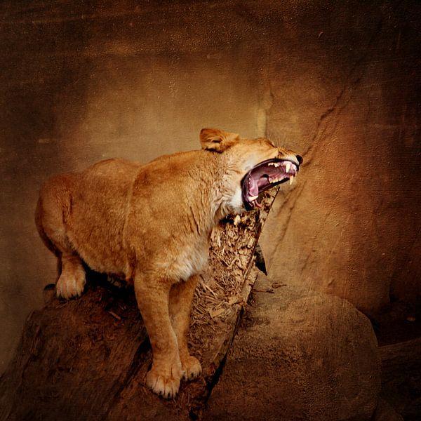 Hungrige Löwin van Heike Hultsch