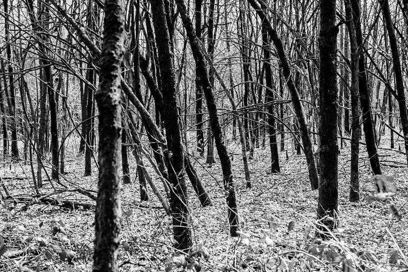 Door de bomen het bos niet meer zien van Ratna Bosch