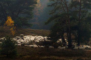 Een herder en zijn kudde van Boudewijn Tempelmans
