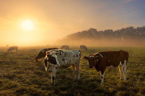 Koeien in de mist van Dennisart Fotografie
