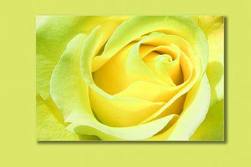 Rose Lemon von Markus Wegner