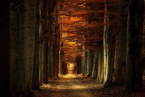 Arbores Autumnale