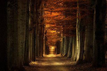 Arbores Autumnale von Rigo Meens
