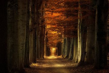 Arbores Autumnale sur Rigo Meens