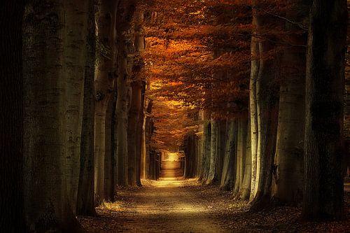 Arbores Autumnale van