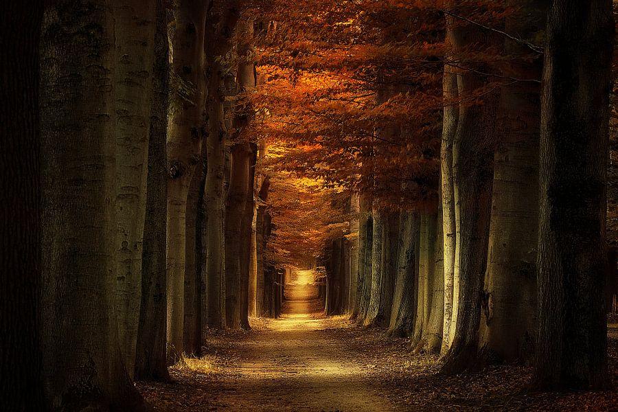 Arbores Autumnale van Rigo Meens