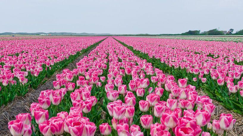 Tulpen op een rij van Alex Hiemstra