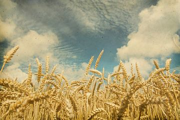Vintage foto van een korenveld met mooie lucht van Seasons of Holland