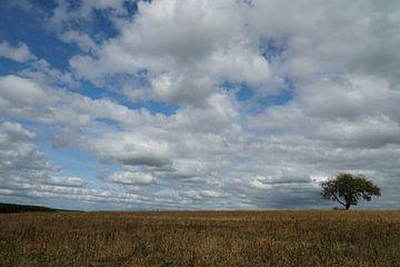 boom met wolkenlucht van Karin in't Hout
