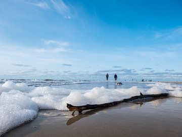 Drijfhout met schuim op het strand aan de Noordzee van Animaflora PicsStock