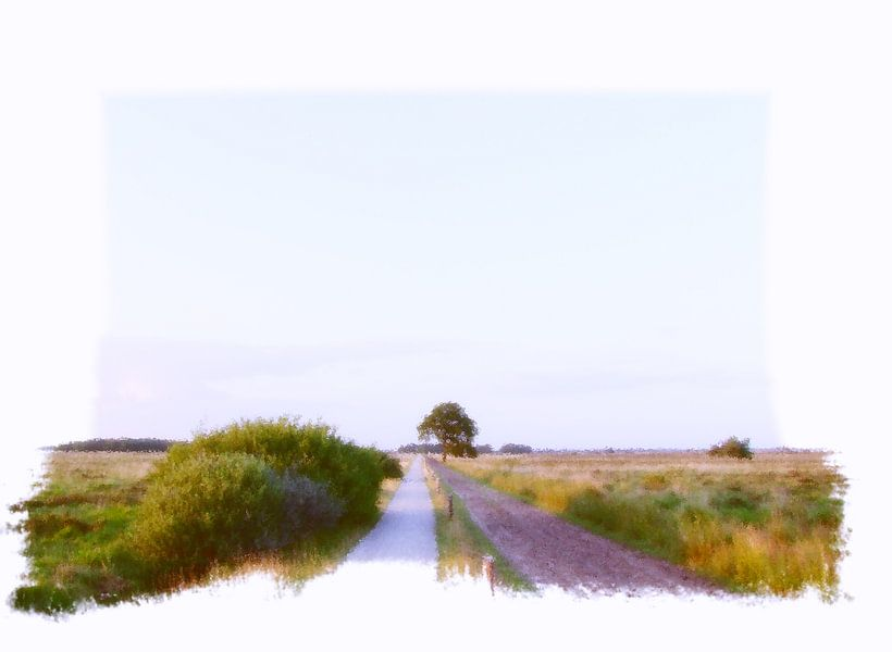 Dwingeloo Moor