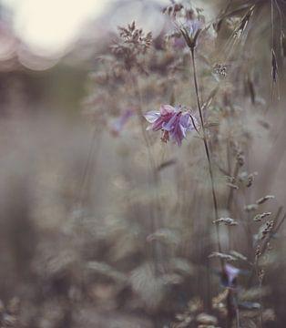 Blumen Teil 137 von Tania Perneel