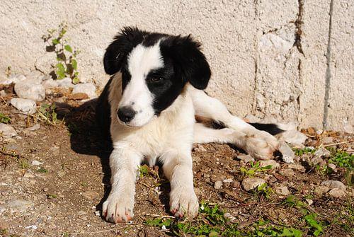 Jonge pup
