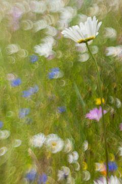 Margriet & bolderik van Wolbert Erich