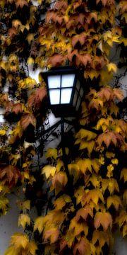 Herfst lichten van Christine Nöhmeier