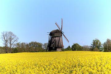 Windmühle im Rapsfeld von Ines Thun