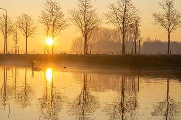 Zwaan in mist van Willian Goedhart