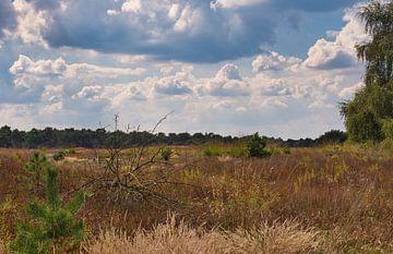 Landschaft in den Niederlanden, die Weerterheide von J..M de Jong-Jansen