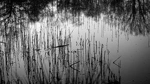 riet in het water, reflecties van de bomenrij op de achtergrond