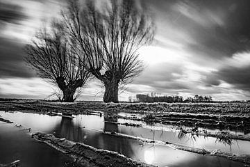 Knotwilgen,Wind, Water, Spiegeling. sur Frank Slaghuis
