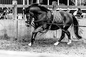 Ein Pony longieren