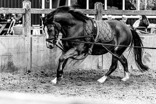 Longeren van een pony