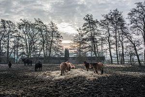 Paarden en wat voer von