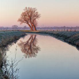 Baum in einer Reihe von Anneke Hooijer