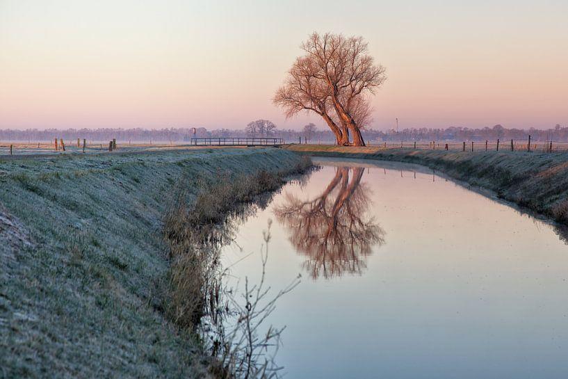 Un arbre sur une rangée sur Anneke Hooijer