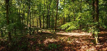 Im Wald von Frank Herrmann