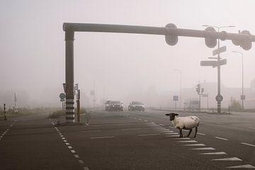 Das schwarze Schaf von Elianne van Turennout