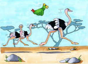 Zeichnung von laufenden Straußen