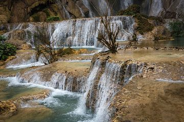 Bäume am Wasserfall Kuang Si, Laos von Rietje Bulthuis
