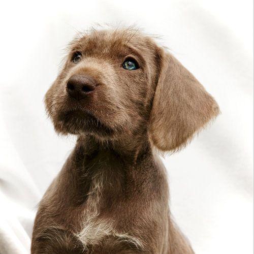 Puppy Look van