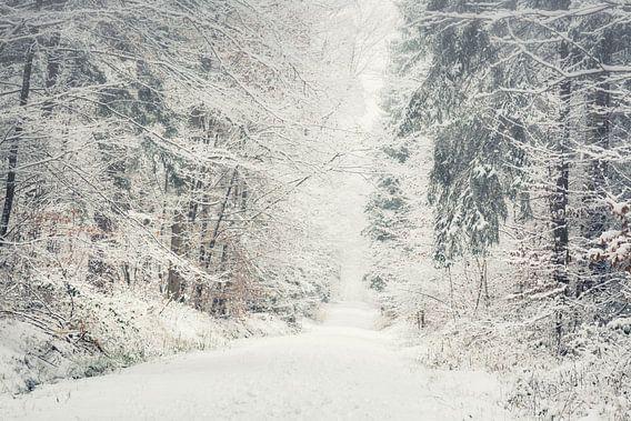 Wandelpad in het besneeuwde bos