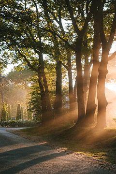Sonnenstrahlen durch die Bäume von Map of Joy