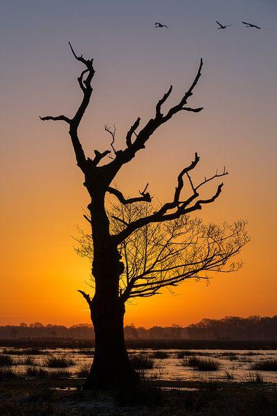 Boom silhouet van Hans Jansen - Lynxs Photography