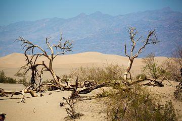 Mesquite Sand Dunes Death Valley van Hans Jansen