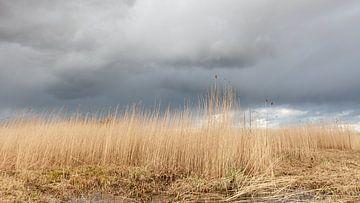 Rietkraag onder dreigende wolkenlucht van Dick Doorduin