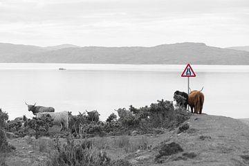 Blick von Applecross auf die Insel Rona von Pascal Raymond Dorland