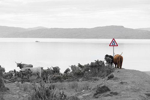 Zicht op Isle of Rona vanaf Applecross