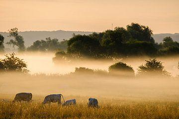 Kühe im Nebel von Joke Beers-Blom