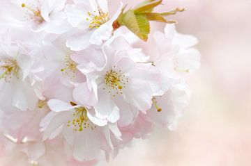 Spring sur Violetta Honkisz