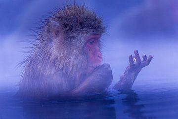 Japanse Snow monkeys van Erik Verbeeck