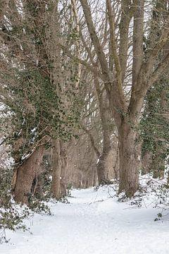 Eiken in  de sneeuw van Hans Monasso