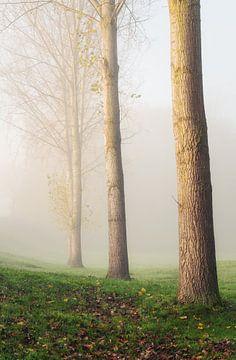 Mistige Populus Canadensis_V van Joris Pannemans - Loris Photography