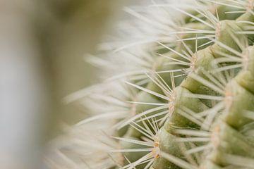 Cactus van Myrthe Vlasveld