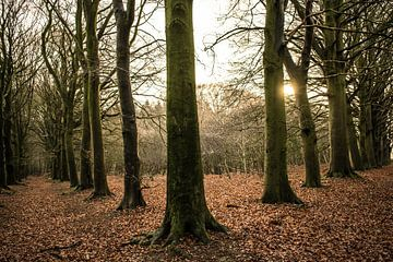 Der dunkle Wald von Robert Snoek